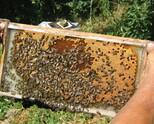 Пчелни полуизградени пластмасови основи