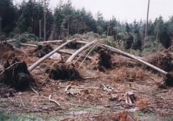Инж. Петър Пешев, директор на Държавното лесничейство: Частните стопани  трябва да почистят горите си от изкоренени дървета