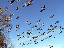 Птиците виждат магнитното поле, установиха учени