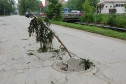 """Инициативата """"Да посадим дърво"""" - ботевградски вариант"""