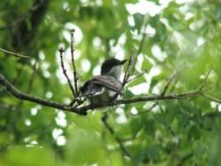 Повече от 1200 вида птици са на изчезване