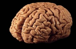 Търсенето в интернет държи мозъка свеж