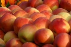 Ябълките са ключът към дълголетието