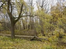Силният вятър е нанесъл щети на седем общински обекта