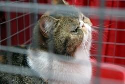 Мишки запалиха пожар в приют за котки