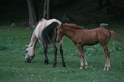 Безстопанствени коне препускат вечер в градинката на Площад 20