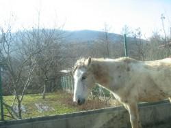 Безстопанствени коне се разхождат по пътя за Зелин