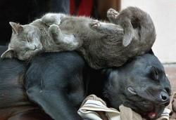 Защо ставаме сънливи след хранене?