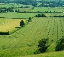 Земеделци могат да кандидатстват за преки плащания на площ
