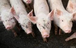 Първи случай на свински грип у нас