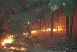 Гората край Кричим пламна отново