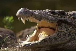 Бременна надви крокодил