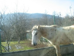 Намериха убити коне в чужда нива