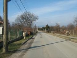 Кметът Георгиев призова съветниците да бъдат по-активни по проблема с безстопанствените коне