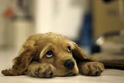 Масово кучетата във Великобритания умират от затлъстяване