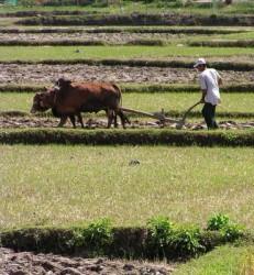 От утре започва преброяването на земеделски стопанства в България
