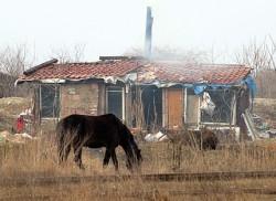Цигани напълниха РПУ Нова Загора