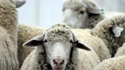"""ЕТ """"Мария Романова"""" ще дари 20 тона фураж за животните в село Бисер"""