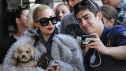 Гага се гаври със защитниците на животни