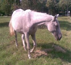 Разобличиха мъж, откраднал коня на свой съселянин