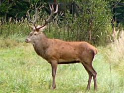Питане - възстановяване на защитени видове