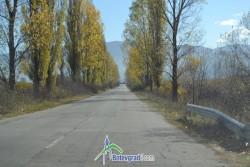 Секат тополите по литаковския път
