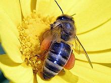 """Фонд """"Земеделие"""" отново ще кредитира инвестиции по Националната програма по пчеларство"""