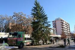 Монтираха коледната елха в центъра на Ботевград