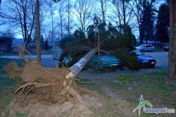 Дърво падна върху две коли