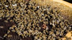 Мъж почина след ужилване от пчела
