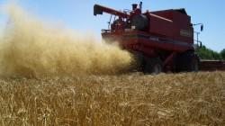 МЗХ: Напомняме, че наближава крайният срок за подаване на декларации и заявления за ползване на земеделски земи