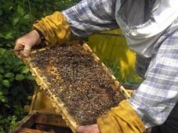 На вниманието на пчеларите