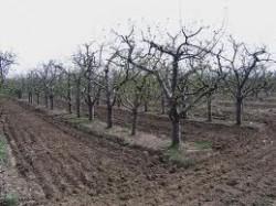 "Фонд ""Земеделие"" отпуска 1.1 млн. лв. за овошки и разсрочва кредити"