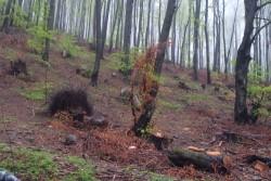 МОСВ не откри нарушения при сечта в Краево