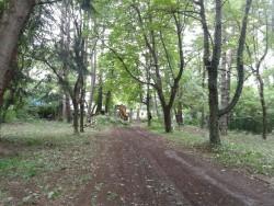 Продължава кампанията за почистване на парка на Колежа по енергетика и електроника