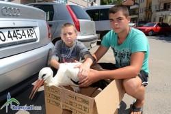 Момчета от Скравена спасиха болен щъркел