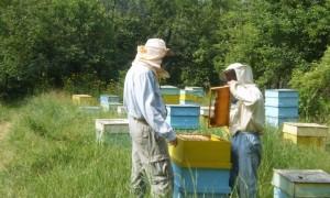 На 1 септември приключва приемът на документи за плащане по пчеларската програма