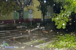Паднал огромен клон от дърво затвори улица