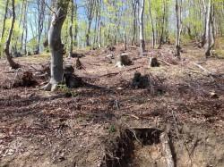 Искането на Сдружение за Ботевград за мерки срещу беззаконията в горите предизвика интереса на управляващите