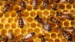 Публикувано е класирането по пчеларската програма
