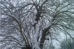 Улиците в Зелин не се почистват от снега, недоволстват граждани