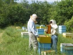 Започва прием на документи за кредитиране по пчеларската програма