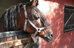 Опасен рецидивист е задържан под стража за кражба на кон