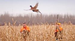 Откриват лова на пернати