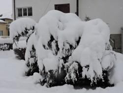 Въпреки обилния снеговалеж, животът в Общината е в нормалните си граници