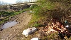 Скелети и вътрешности от животни, изхвърлени край  пътя за Литаково