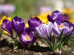 Първа пролет е!