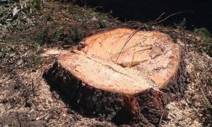 Започват засилени проверки на дейностите в горите, по пътищата и в населените места за законния произход на дървесината