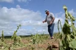До 30 септември се приемат заявки за помощи за застраховане на земеделска продукция