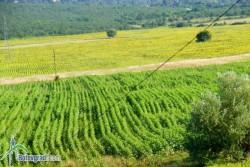 74 000 дeкара земеделска земя стопанисва общината
